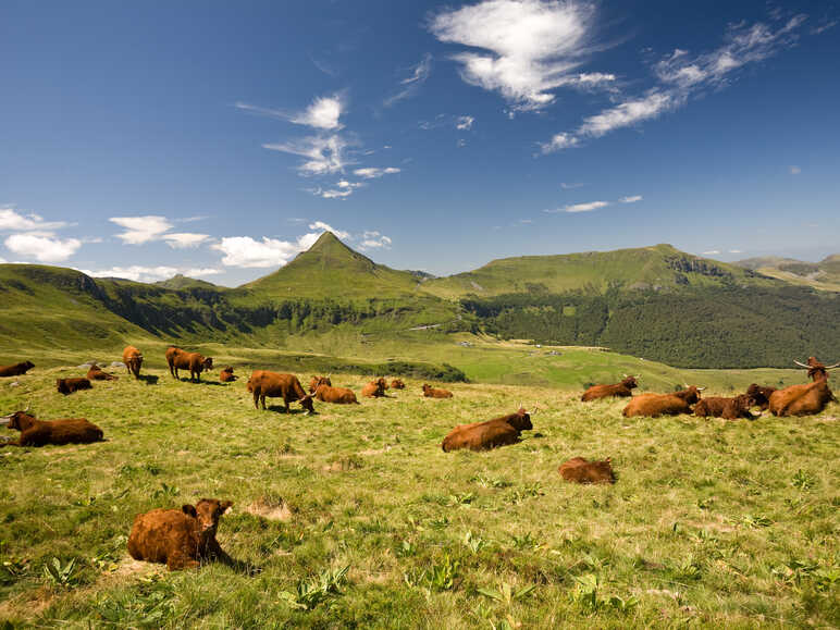 Le Cantal, clou du spectacle
